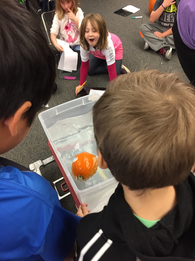 Will my pumpkin sink or float? First grade