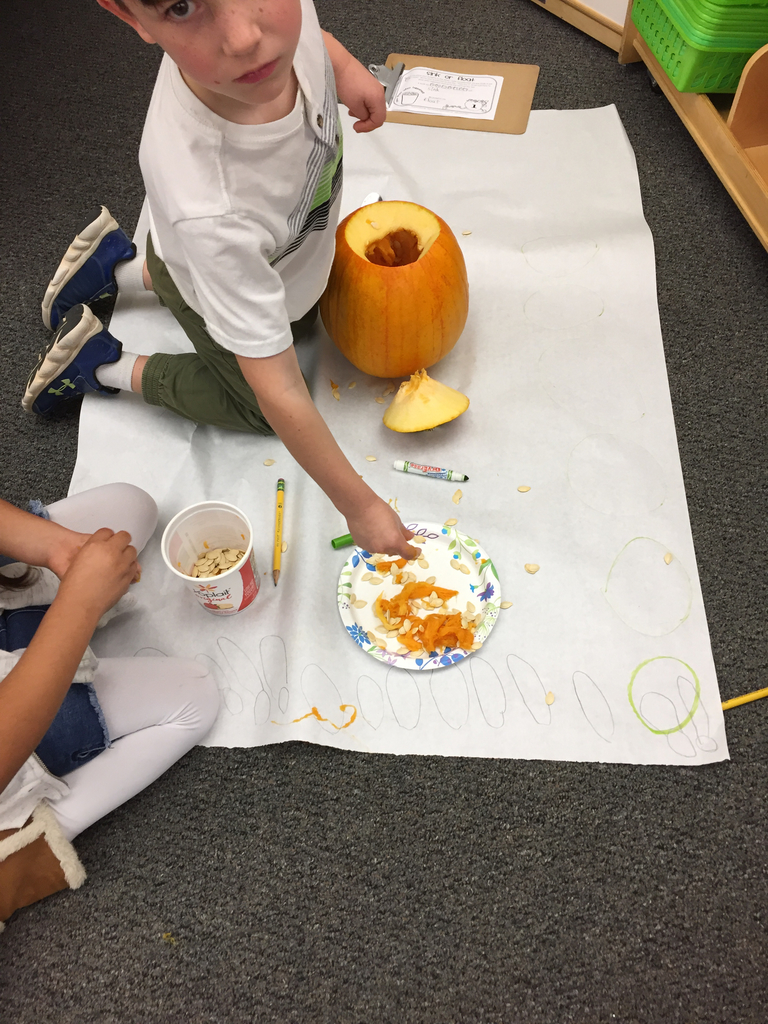 First grade counting pumpkin seeds!